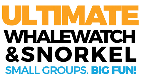 Ultimate Whalewatch & Snorkel