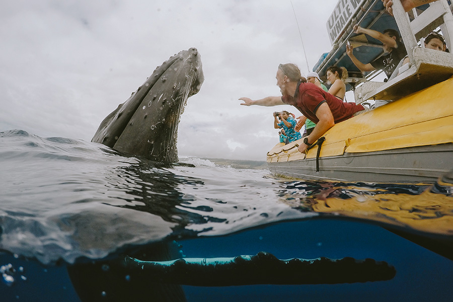 seeing a whale on raft tour
