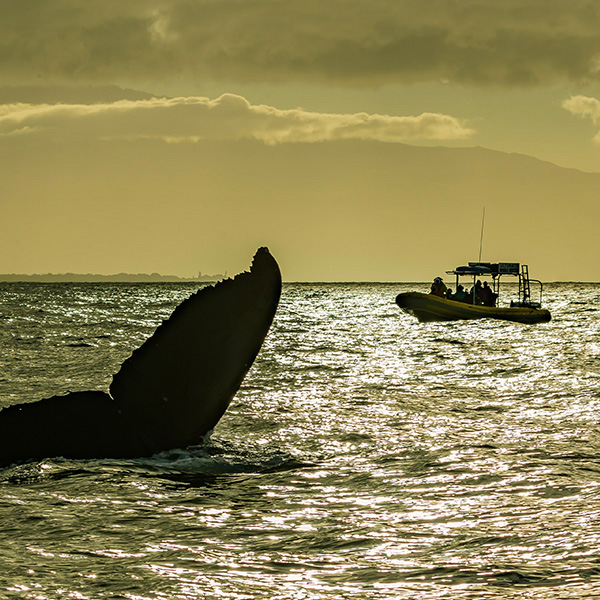 vip whale watching tour for 2 hrs