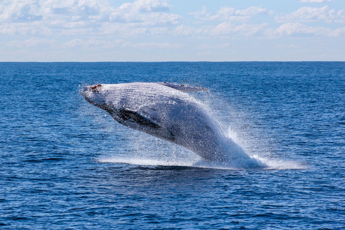 best-island-in-hawaii-for-whale-watching