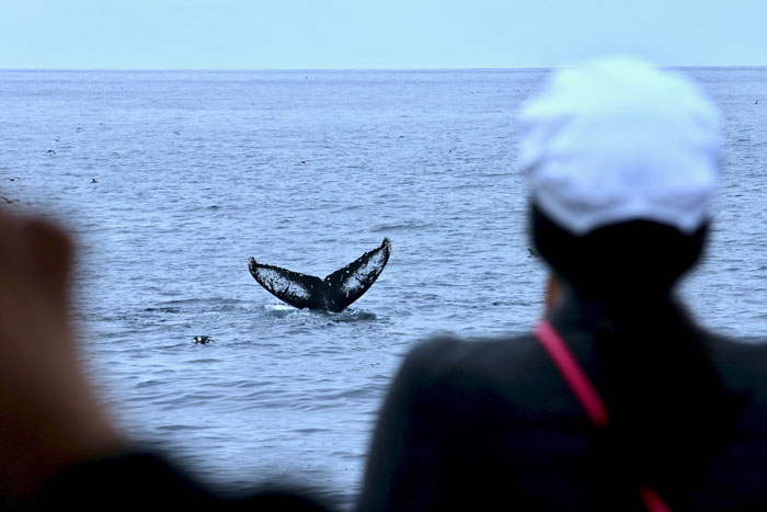 when-are-whales-in-maui-hawaii