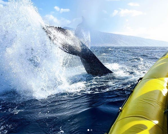 whale tail sighting on private boat charter tour in Hawaii