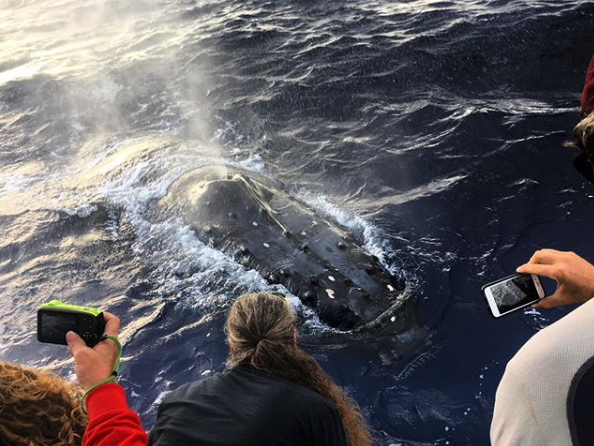humpback whale sighting on private boat charter tour in Lahaina