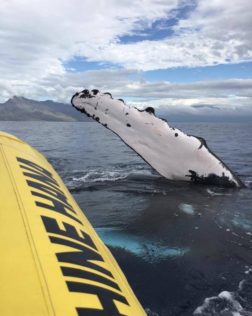 humpback whale wave