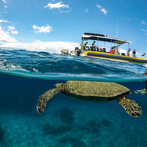snorkeling boat near sea turtles