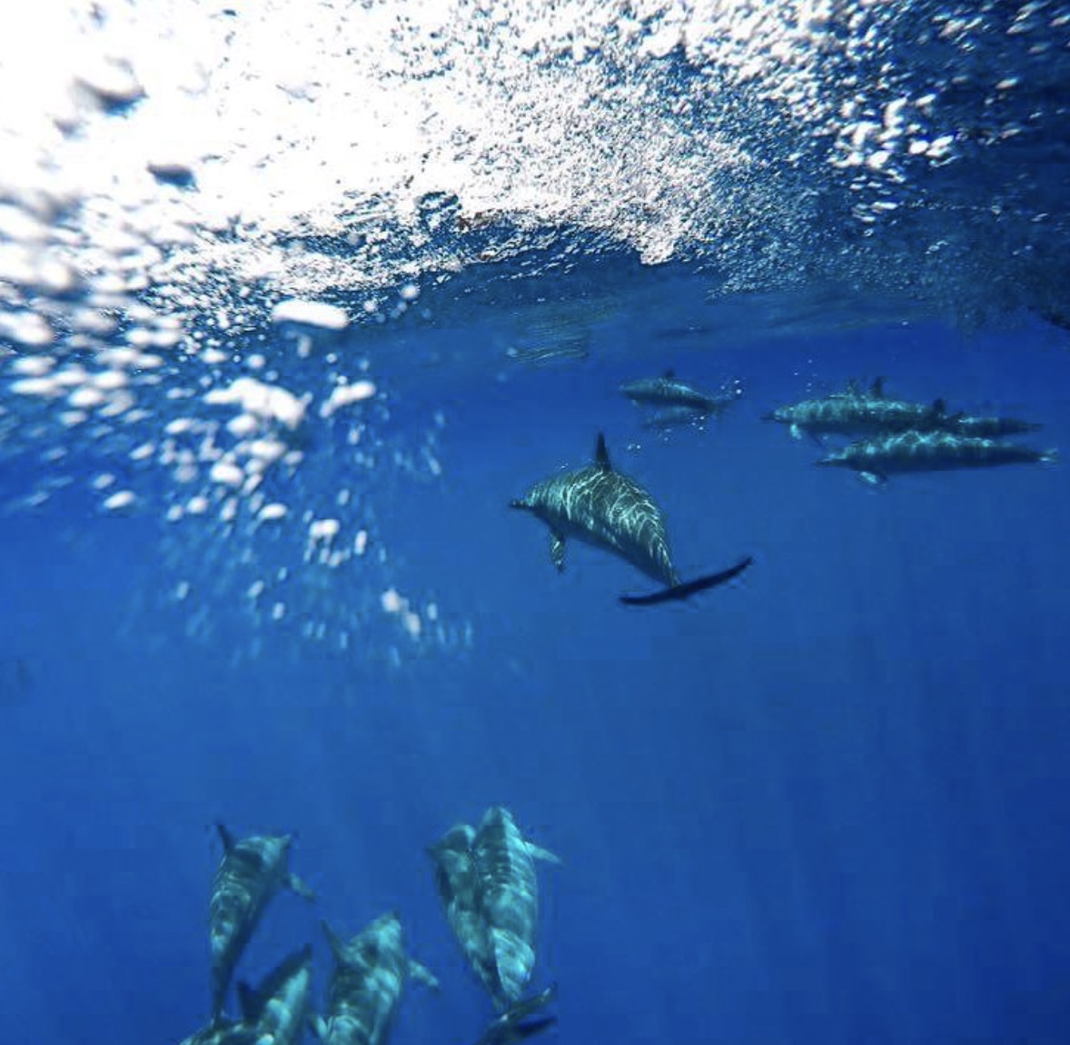 dolphins top 10 snorkeling spots