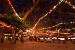 Lighting of the Banyan tree at night in Maui