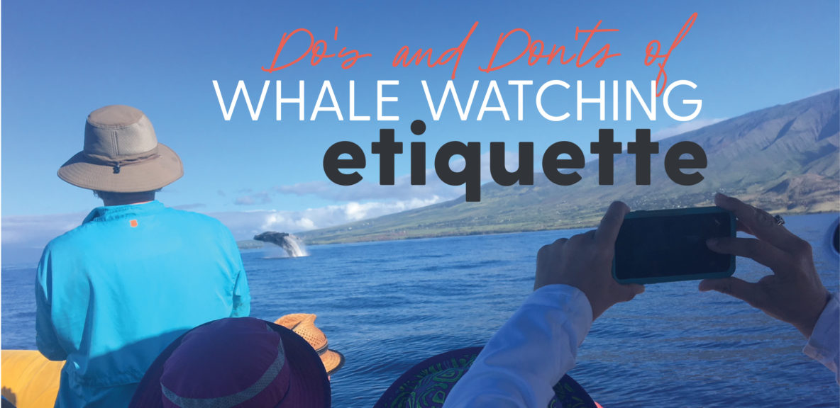 whale watching etiquette