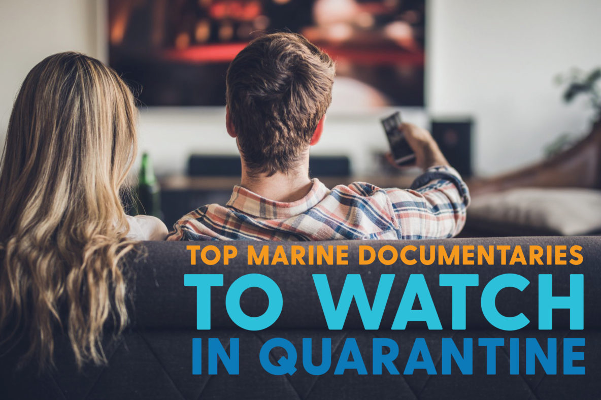 couple watching marine documentaries