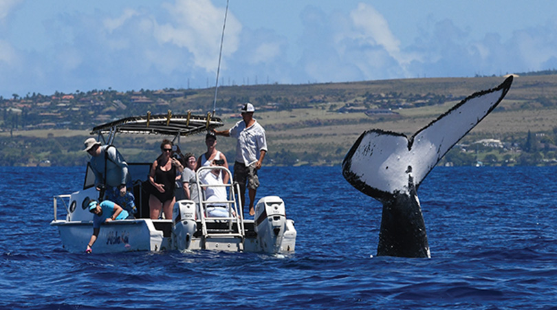 Maui private boat watching whale