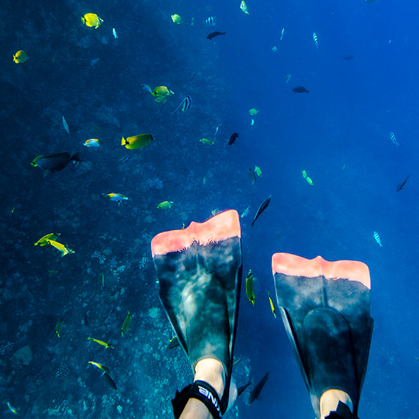 snorkeling with tropical fish