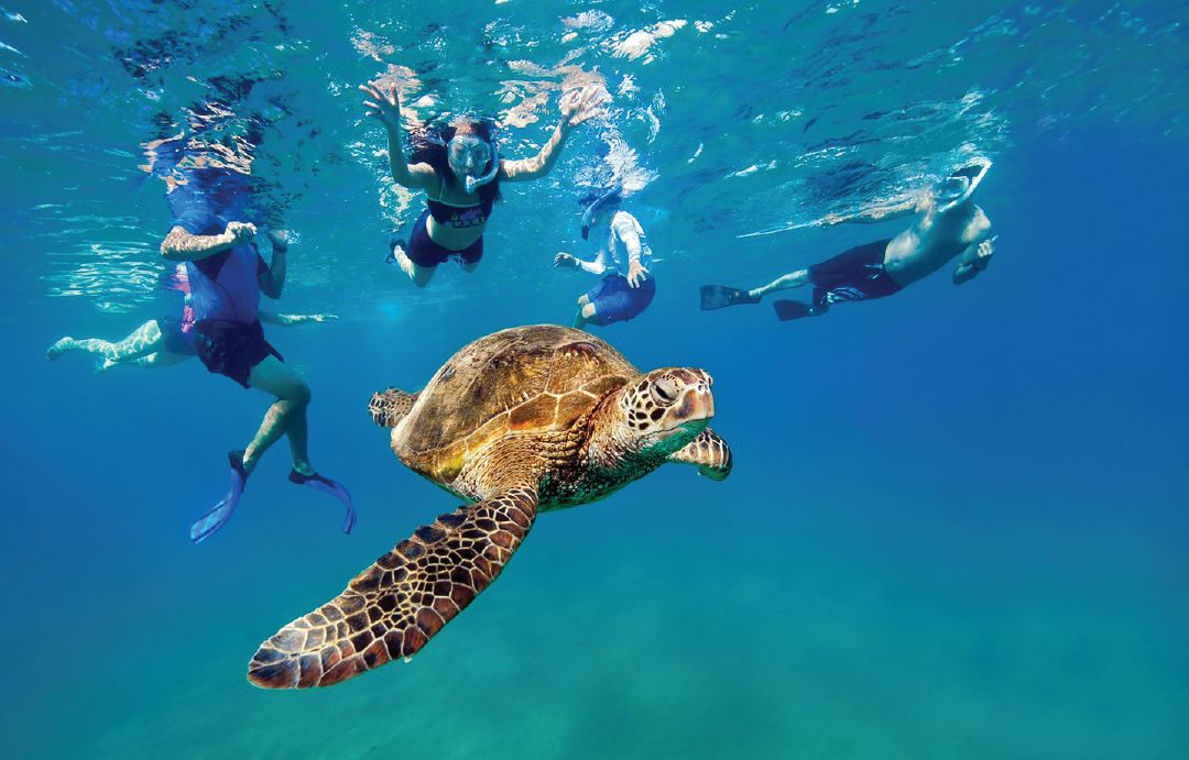 SAFELY SNORKELING WITH SEA TURTLES IN MAUI